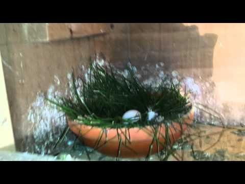 2015 Breeder's down on eggs