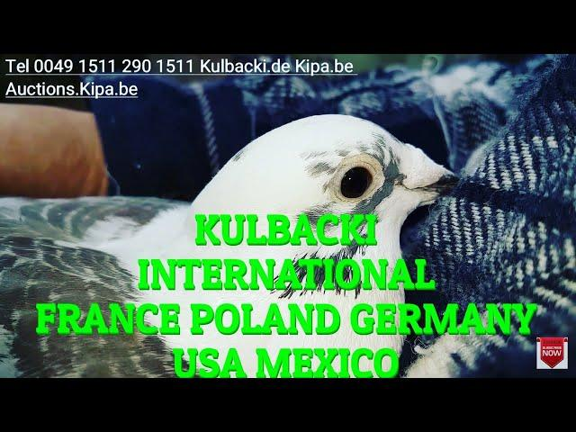KULBACKI INTERNATIONAL GERMANY POLAND FRANCE USA MEXICO TEL 0049 1511 290 1511 (interview with USA)