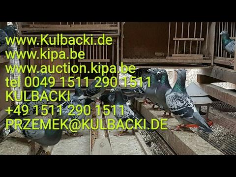 Kulbacki Dolce Vita family 1 million euro family 6x1.NPO Manager Przemek tel +49 1511 290 1511