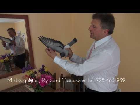 Prezent parka gołębi od Mariusza dla taty Józefa na 70 -tkę.