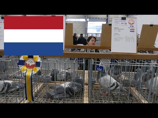 Holandia, The Netherlands - Olimpiada Gołębi, Pigeon Olympiad   Poznań 2019