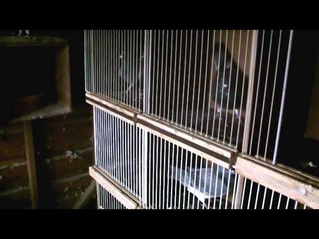 op bezoek bij de duivenmelker