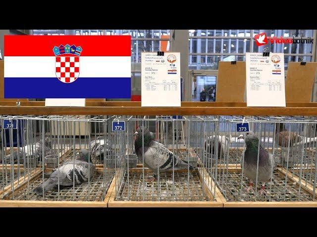 Croatia, Hrvatska, Chorwacja - Olimpiada Gołębi, Pigeon Olympiad - Poznań 2019