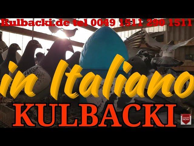 in Italiano, RACING PIGEONS KULBACKI tel.: +49-1511-290-1511
