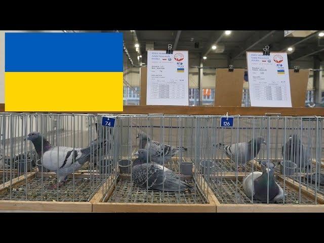 Ukraine, Ukraina - Olimpiada Gołębi, Brieftauben Olympiade - Poznań 2019