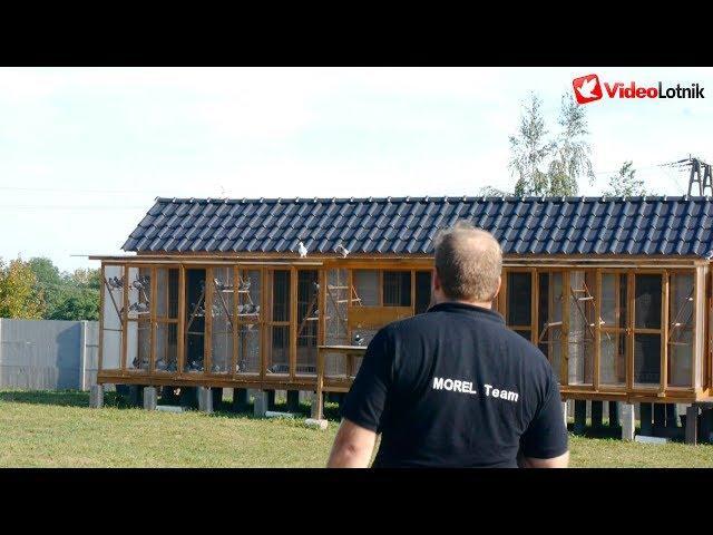 Morel Team - PZHGP Zagłębie 0493 - Bartosz Morel pigeon breeder