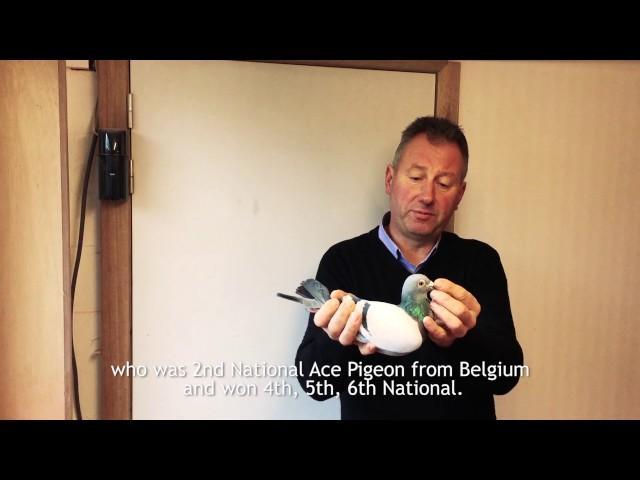 Clicque Gino - Wevelgem, Belgium
