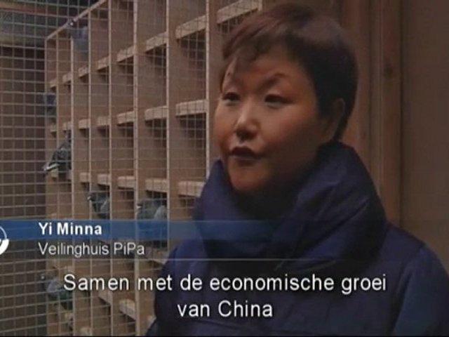 Chinezen smijten met geld voor Belgische duiven