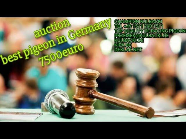 Dortmund Racing Pigeons show,  biggest live pigeons auction najlepszy gołąb Niemiec 7500euro AUKCJA