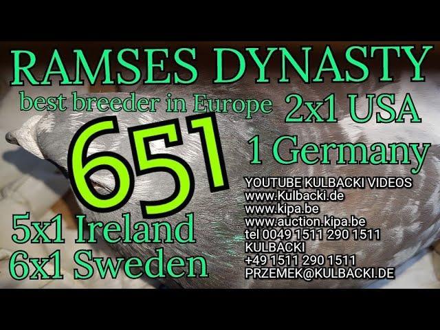 651 na sprzedaz for sale zum verkauf, syn Championa 41 x córka Ramsesa 14x1. RAMSES, KULBACKI RACING