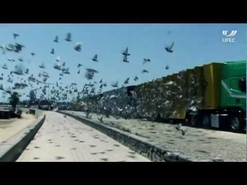 Barcelona International Pigeons Race 2012