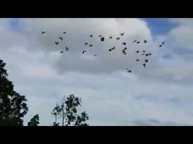 Dervi de camajuani Cuba 45 kilometros