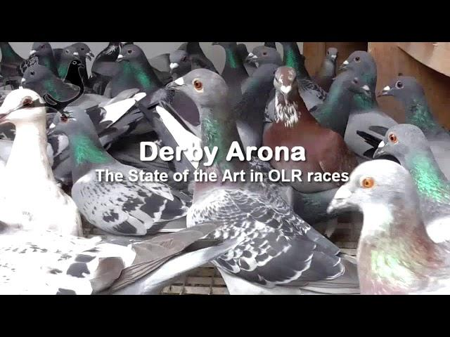 Derby ARONA - Pigeons Condition 1st December 2017 www.DERBYARONA.com