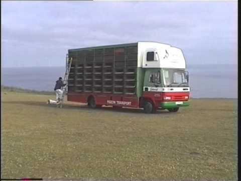 Video 24: L&SECC Sennen Cove Pigeon Race 2001