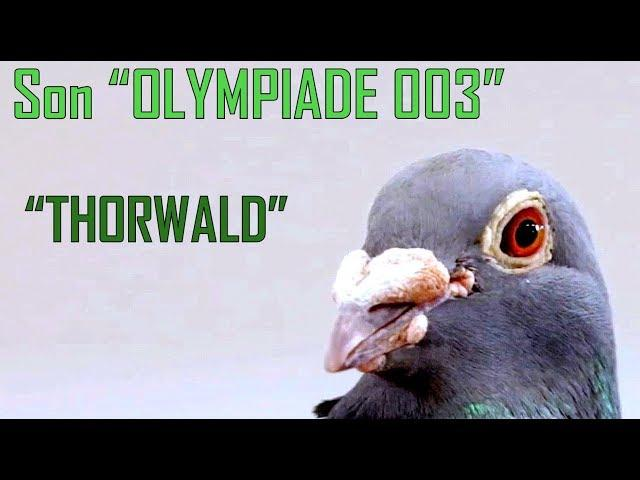 Son OLYMPIADE 003, Thorwald presented