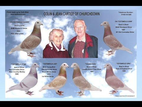 Video 362: Colin & Jean Carter of Churchdown: Show Pigeons
