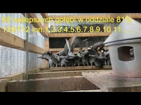 Najlepsze 60 lotniki w Oddziale pierwsza 15 z lotu 220km 81% 139/112kon tel 0049 1511 290 1511