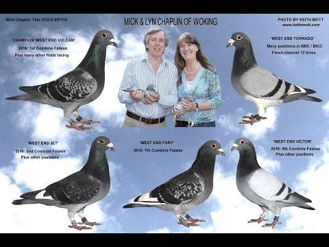 Video 346: Mick & Lyn Chaplin of Woking: Premier Pigeon Racers
