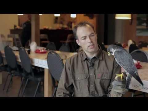 Falconer Ben de Keijzer talks about the peregrine falcon / Ben de Keijzer vertelt over de slechtvalk
