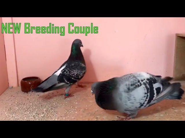 New Breeding Couple 2019 Part 20