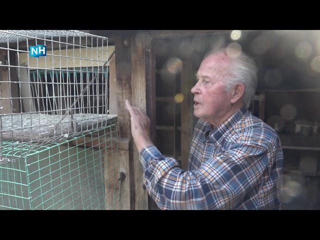 """Verdriet en ongeloof bij Heemskerkse duivenmelker (87): """"Alle duiven zijn doodgemaakt"""""""