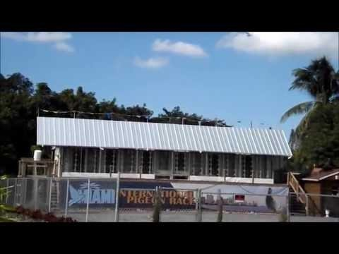 Miami International One Loft Pigeon Race - Pigeon Racing
