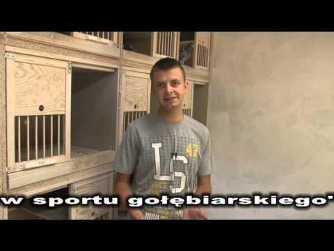 Przemysław Niedbalski - W gołębniku rozpłodowym