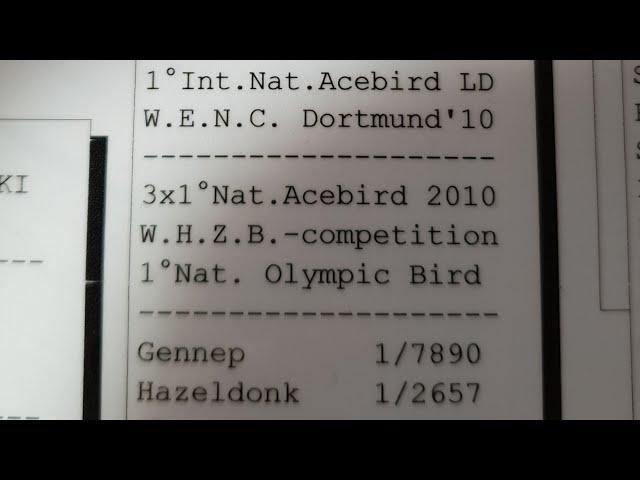 młode gołębie na sprzedaz for sale zum verkauf tel 0049 1511 290 1511 *Whatsapp*