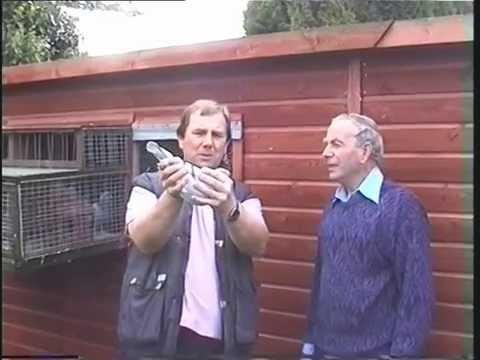 Video 162: Pigeon Loft Visits In Devon 1996