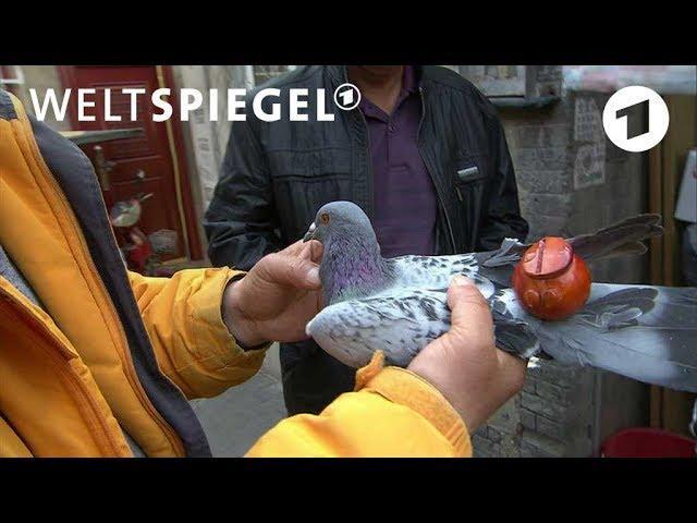 Schnappschuss: Flöten für Tauben in China | Weltspiegel