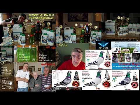 pomoc w hodowli , informacje na zywo live stream
