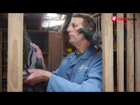 Benny Steveninck - Stars of Pigeon Racing Sport [ENG]