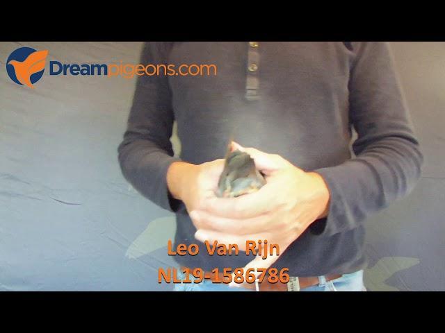 NL19-1586786 - Leo Van Rijn Dreampigeons Auction video