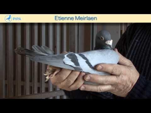 PIPA - Etienne Meirlaen Auction - De Gouden Vleugel