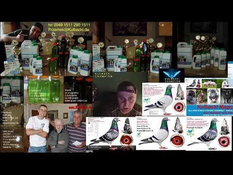 live stream super zdrowe golebie, origalne produkty zycia, od Przemka Kulbacki