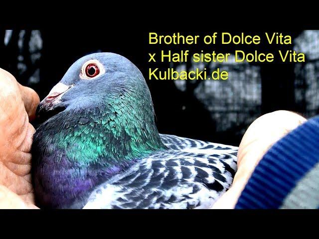 DV-039-19-2973 Champion |  Auctions.KIPA.be | Brother of Dolce Vita x Half sister Dolce Vita