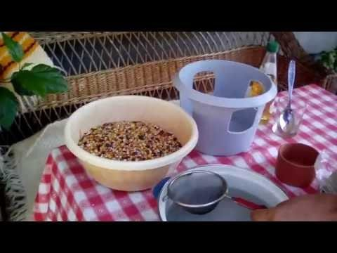 The RIGHT way to prepare a tea for pigeons ! ! !