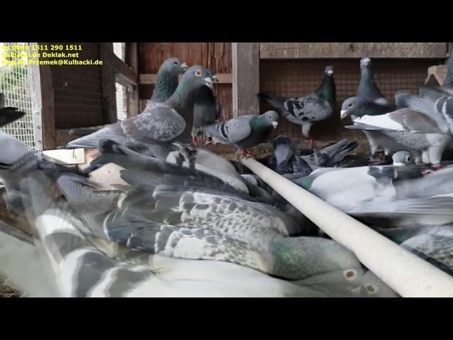 Meine Witwerweibchen & Witwervögel,ich lade Sie herzlich zur Zusammenarbeit ein tel +4915112901511