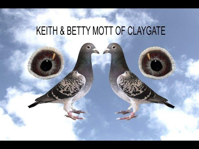 Video 414: Keith & Betty Mott of Claygate: Pigeon Pairings 2020