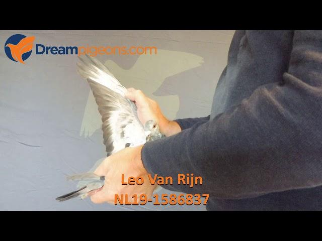 NL19-1586837 Leo Van Rijn Dreampigeons Auction Video