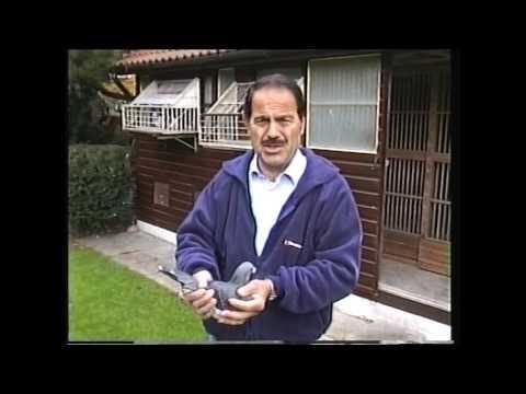 Video 277: Tony Theodorou of Richmond: Premier Pigeon Racer