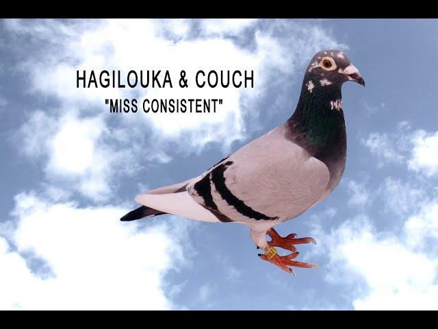 Video 444: Hagilouka & Couch of Feltham: Premier Pigeon Racers