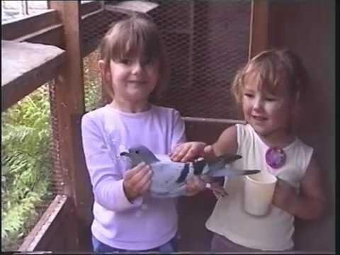 Video 167: The Kids At The Claygate Loft With The Pigeons 2006