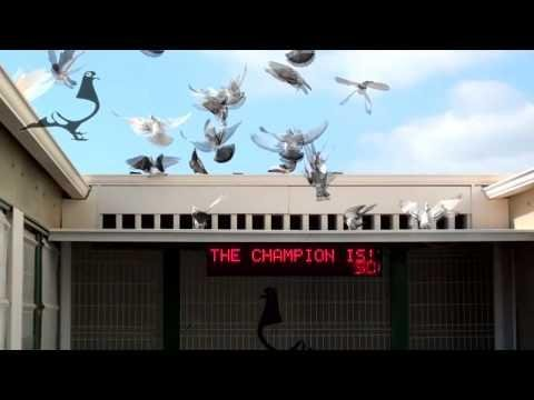 Arona-TENERIFE Pigeon Race 2012 - Semifinal Car Race HOTSPOT-3 13th Mar 2012