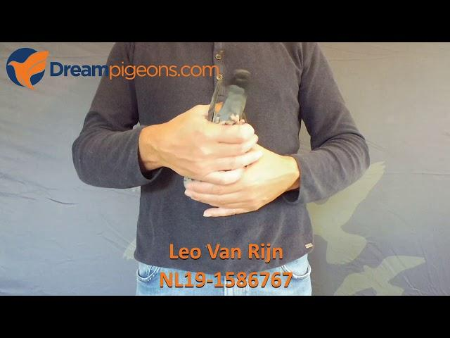 NL19-1586767 - Leo Van Rijn Dreampigeons Auction Video