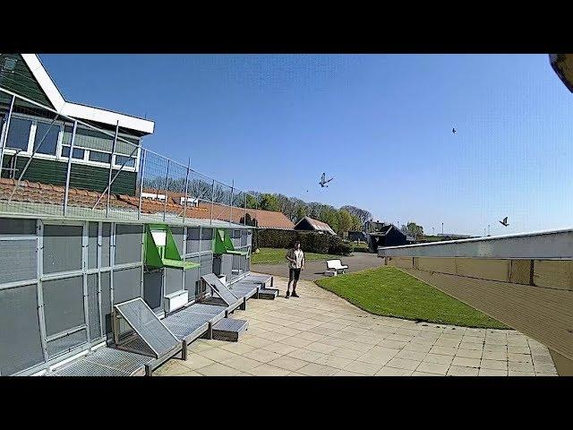 Vlog #27 Arrivals of our pigeons from Bierges April 20th 2019
