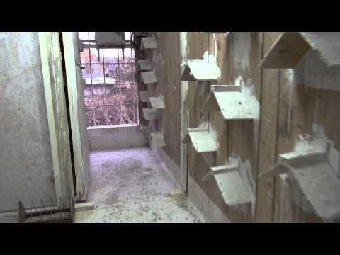 Wdowieństwo totalne szybkich gołębi -Tosnowiec