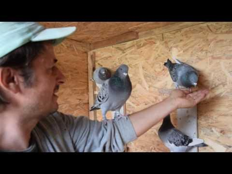 More into Taming your birds, easy steps to follow