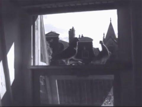 1946: De duivenmelkers van Amsterdam in de Jordaan en Amsterdam-Oost - oude filmbeelden