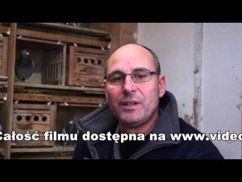Tino Bergemann - początki hodowli